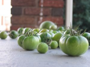 Green Tomatoes 2