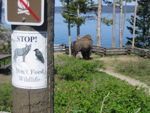 Don't Feed Wildlife